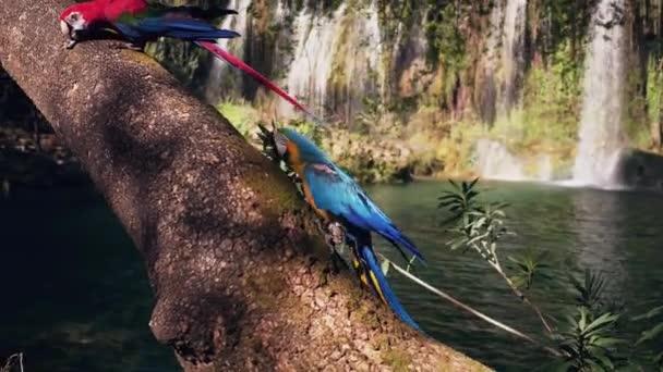 Dva papoušci na dřevě v džungli. Dva krásní papoušci v zeleném prostředí. dvě mouchy sedící na skále. Divoká příroda z tropické přírody.