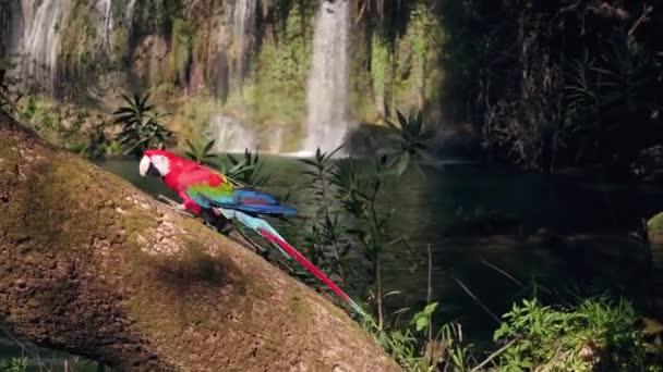 Červený papoušek na dřevěné v džungli. Scéna divoké přírody z tropických oblastí.