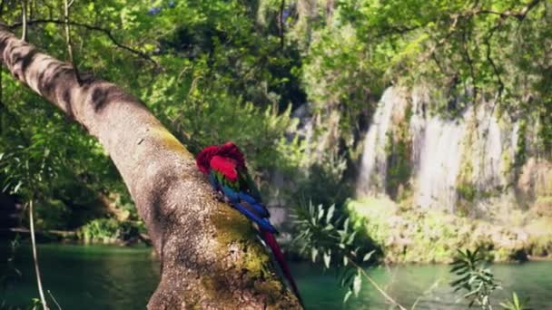 Red parrot on wooden in jungle. Wildlife scene from tropical nature.
