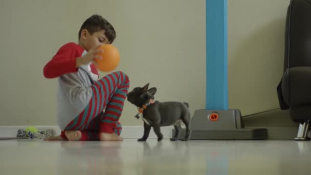 Lassú mozgás, egy kisfiú és egy Francia Bulldog kiskutya játszik a labdát sz