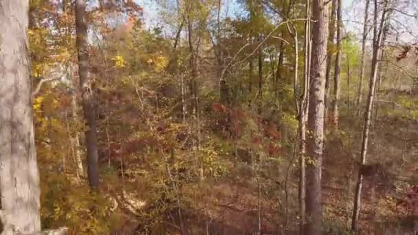 Great camera shot as if coming out of woods in the autumn/fall season in North Carolina
