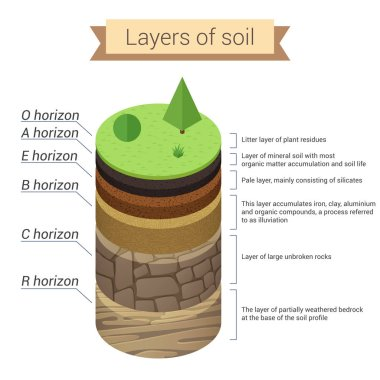 Soil layers. Soil is a mixture of plant residue and fine mineral particles, which form layers. Vector diagram