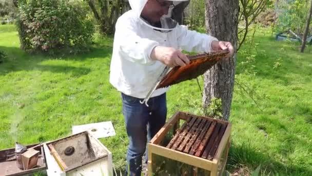 Imker überprüfen Gesundheit der Bienenstöcke im Garten. Authentische Szene in der Natur