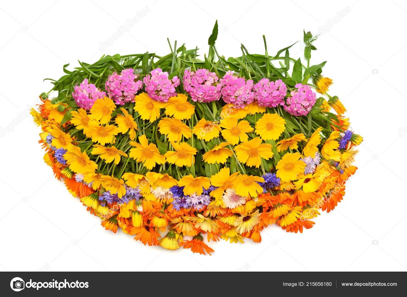 Bouquet Beautiful Oval Form Flowers Calendula Koreopsis