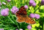 Fotografia Bella farfalla sulla macro fiori