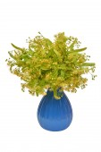 Fotografie Linden flower bouquet in a vase beautiful isolated on white background. Flat lay, top view