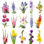 Gyűjtemény gyönyörű virágok válogatott szarkaláb, kardvirág, liliom, iris, muscari, kémiai japonica, nárcisz, Dália és rose. Lapos feküdt, top view