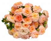 Fotografie Roses bouquet of orange isolated on white background. Delicate flowers. Flat lay, top view. Floral pattern, object. Nature concept. Wedding, bride, love