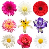 Flowers head collection of beautiful daisy, iris, rose, gerbera,