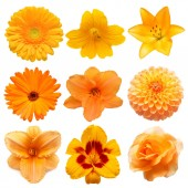 Fotografie Collection beautiful head orange flowers of gerbera, lily, dayli