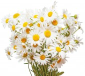 Fotografie Bouquet of large white daisies isolated on a white background. F