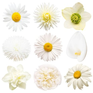 Collection beautiful head white flowers of dahlia, rose, chamomile, daffodil, helleborus, calla, daisy isolated on white background. Beautiful floral delicate composition. Flat lay, top view stock vector