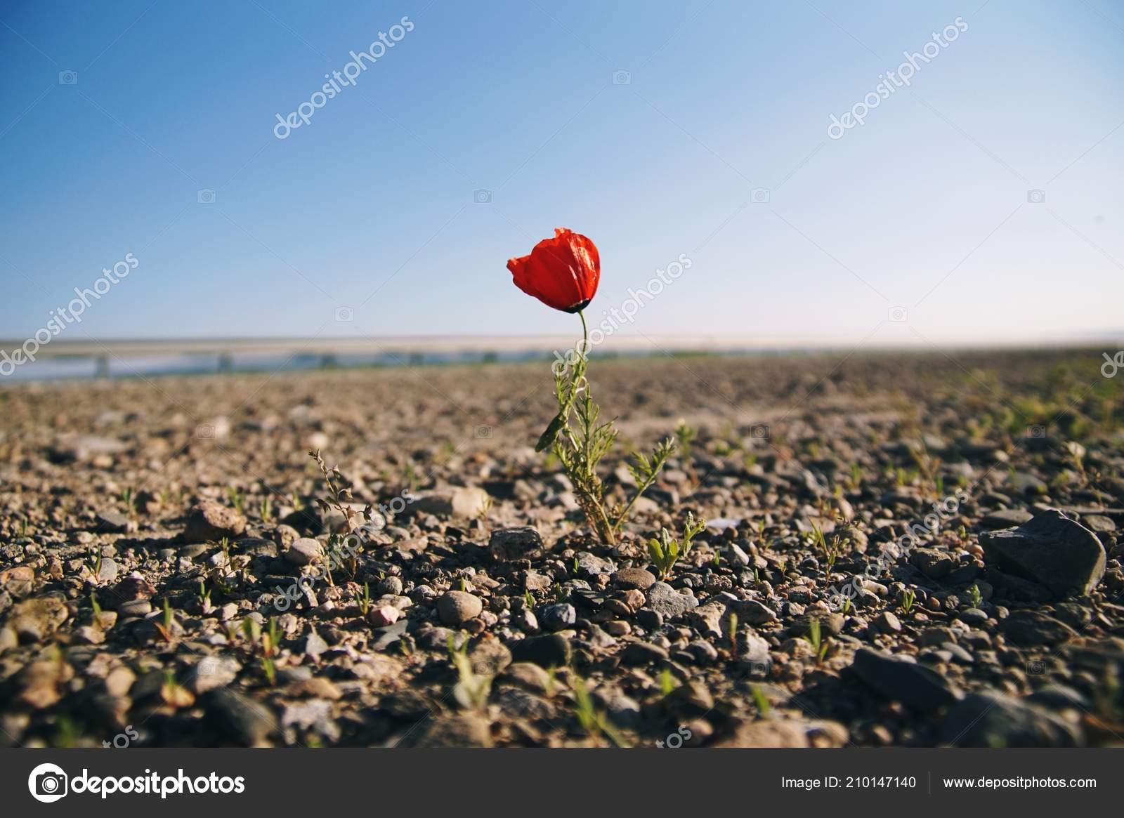 Magányos virágkertészet, Legolvasottabb cikkek