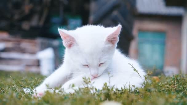 bílá dívka kočička obrázky