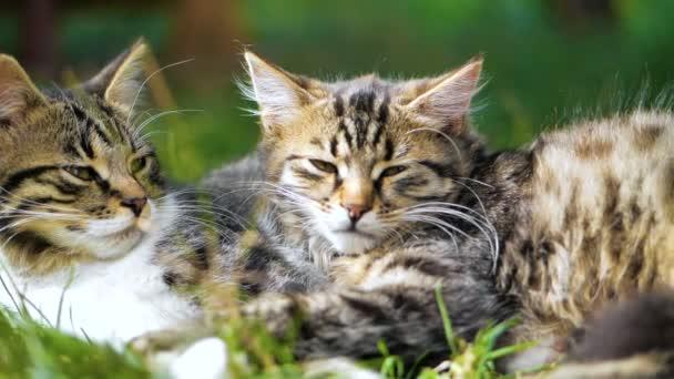 Dvě roztomilá kočičky lež a spát v létě v trávě v pomalém pohybu.