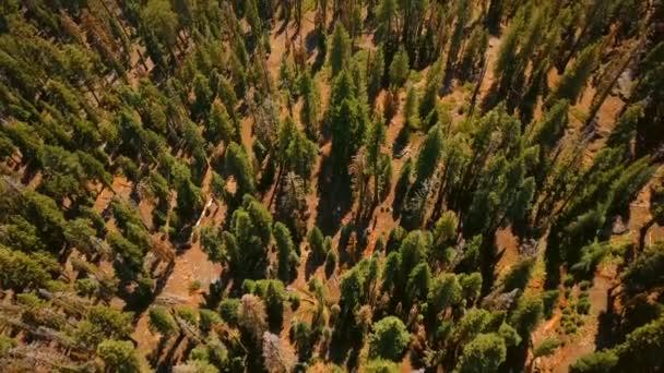 Anténa Yosemitského národního parku pohled shora s obrovské vodopády, Half Dome skály, lesy a turistické stezky.