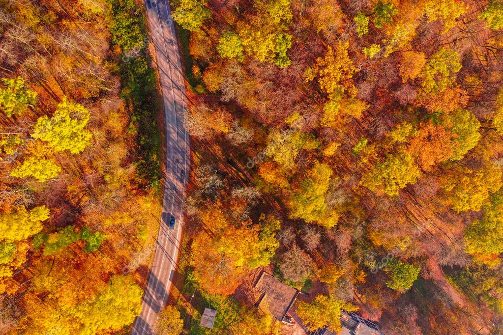 Lonely road through the orange autumn forest. Golden autumn road.