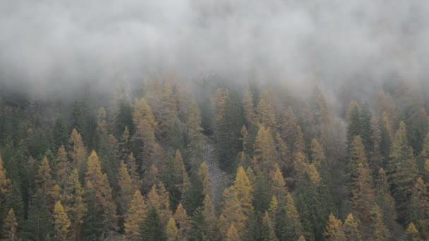 Mlžný Les v údolí Gressoney poblíž Monte Rosa během podzimu