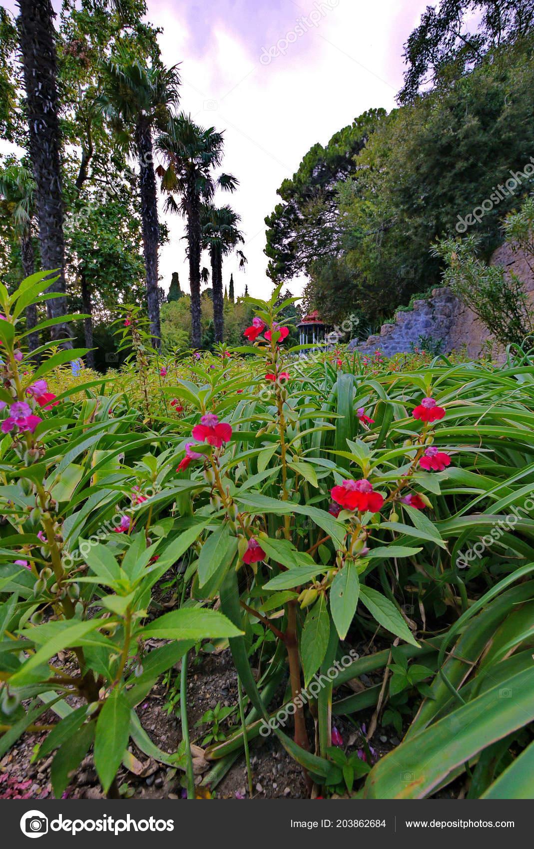 Schöne Rote Blumen Unter Dem Grün Blätter Auf Das Beet Im Schatten