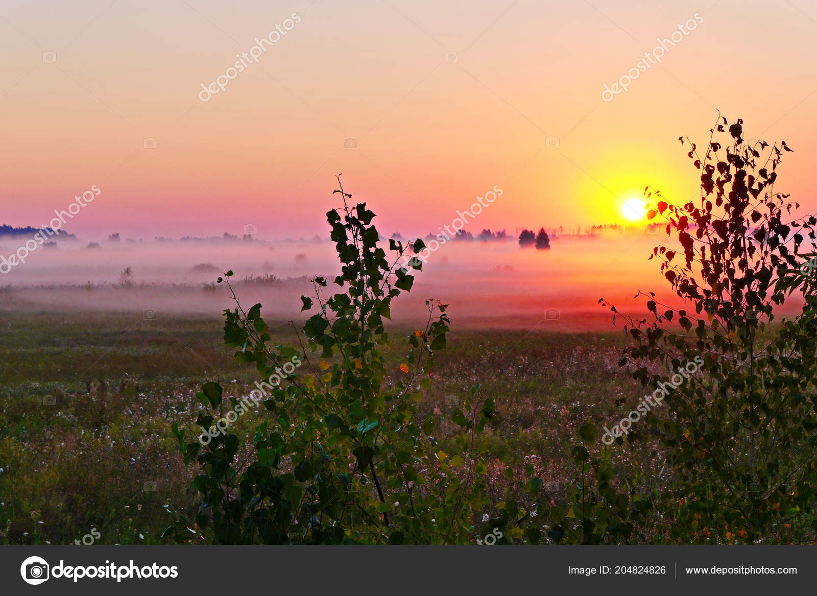 A beautiful landscape of the nature of a green field with flowers a beautiful landscape of the nature of a green field with flowers wrapped in a pre dawn mist with the sun rising behind the trees izmirmasajfo