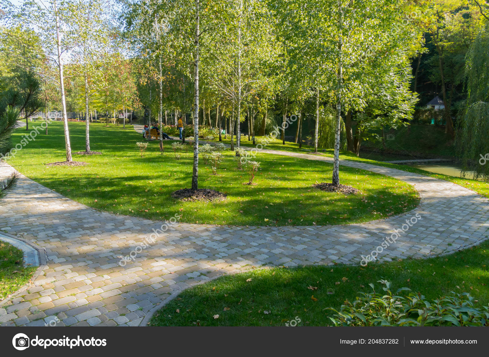 Rest In A Park On A Bench In The Shadow Of Low Young Birches Growing