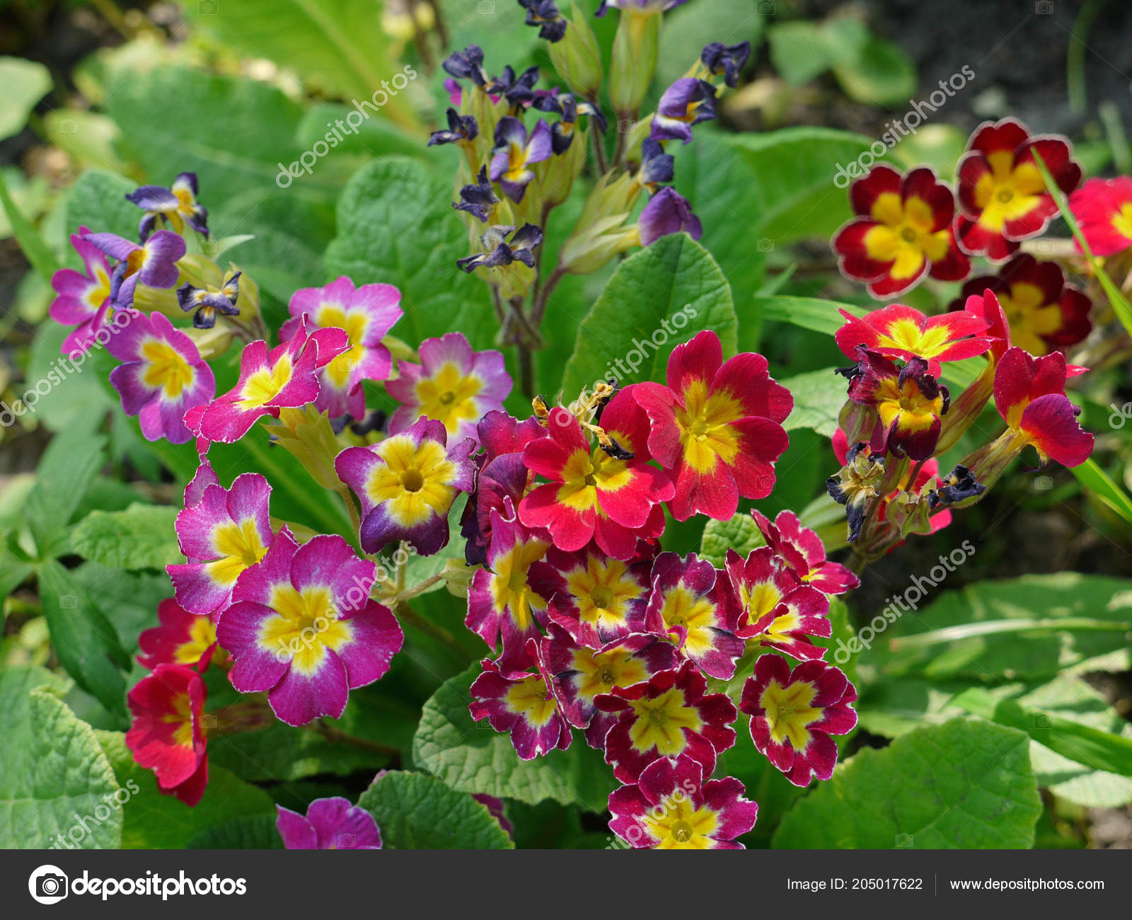 Tender flowers with colorful flowers are very beautiful and bright ...