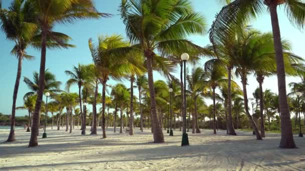 View of tropical beach through coconut palm trees on sunset. Shadows of palm tree fronds fluttering on textured sand beach. Turquoise water of the Caribbean Sea. Riviera Maya Mexico.