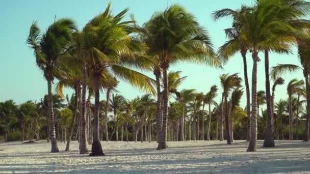 Pohled tropické pláže prostřednictvím kokosových palem na západ slunce. Stíny z palmových listů stromu vlající na texturou písčité pláži. Karibské moře. Riviera Maya Mexiko