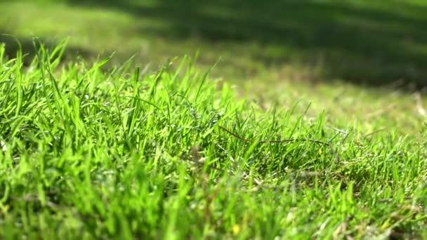 Vystínovat listí stromů na zelené trávě. Vítr otřásá větvemi stromů. Teplý letní den. Šťavnatá zelená tráva na trávníku. Ukončení záběru.