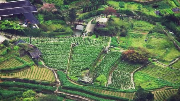 Mountains And Valleys of Garden Calla Lily with houses in Qixing Mountain in the center of Yangmingshan National Park