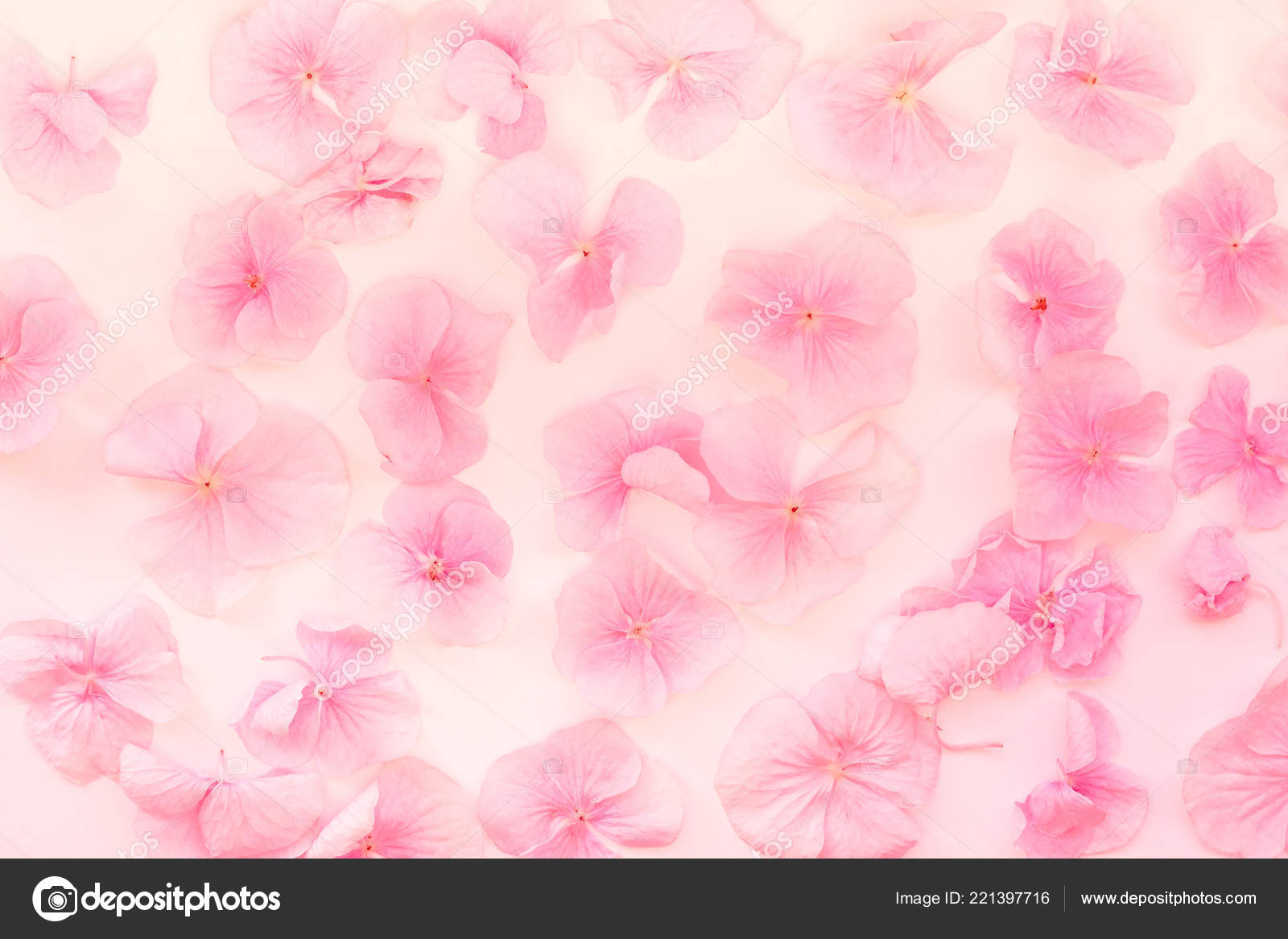 Summer Blossoming Hydrangea Flower Bokeh Background Pastel Soft