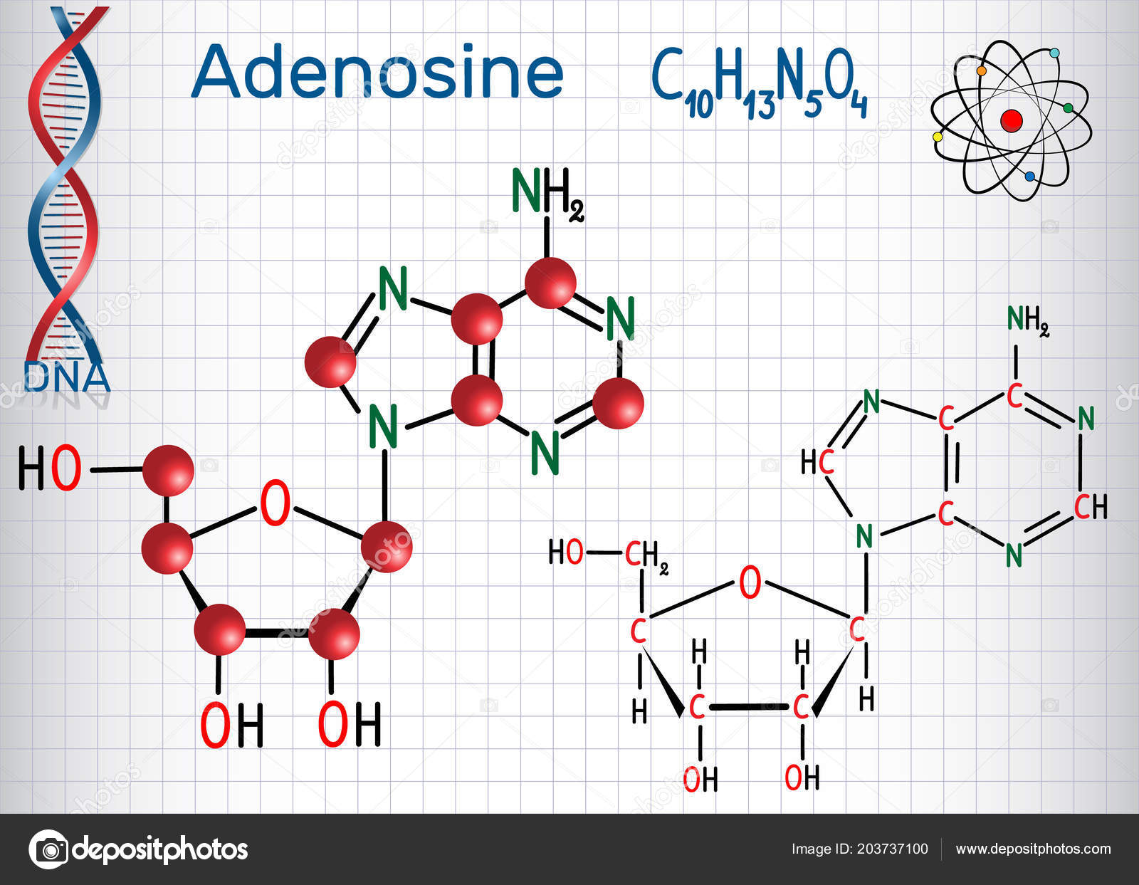 Adenosine Purine Nucleoside Molecule Important Part Atp Adp Camp Rna