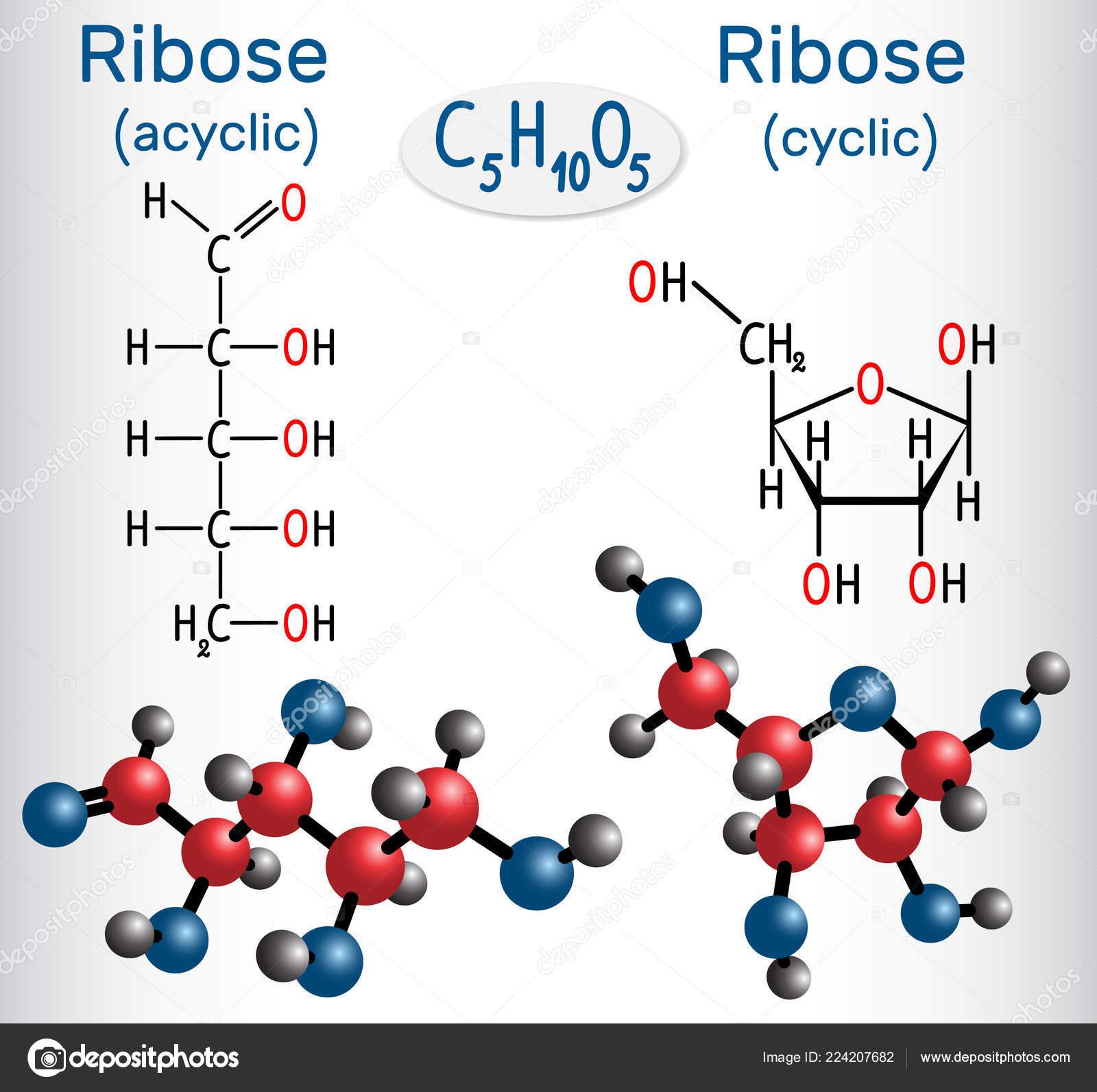 Forma Lineal Acíclicos Moléculas Ribosa Forma Cíclica Ribosa