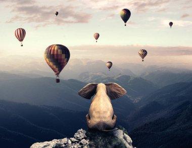 Elephant admiring the balloons
