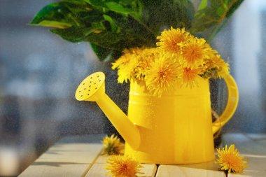 """Картина, постер, плакат, фотообои """"желтые летние цветы одуванчики в металлической банке полива на деревянной поверхности с зелеными листьями и синее окно на заднем плане с капельками на стекле, избирательный фокус """", артикул 379576398"""