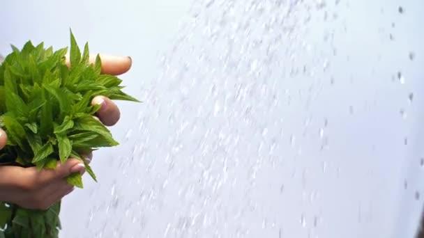 Voda na Zenske rukou s mátou rostlin