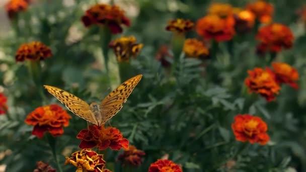 Pillangó a virág elszáll