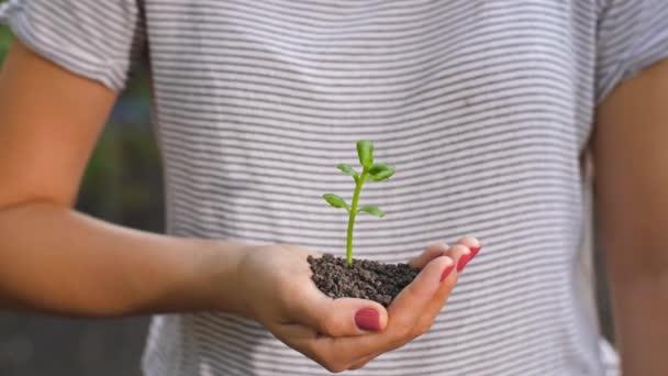 ruce ochrana malá rostlina
