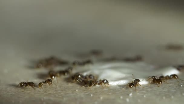 Ants on a kitchen was detected