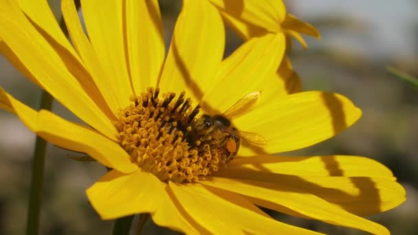 včela na žlutém květu