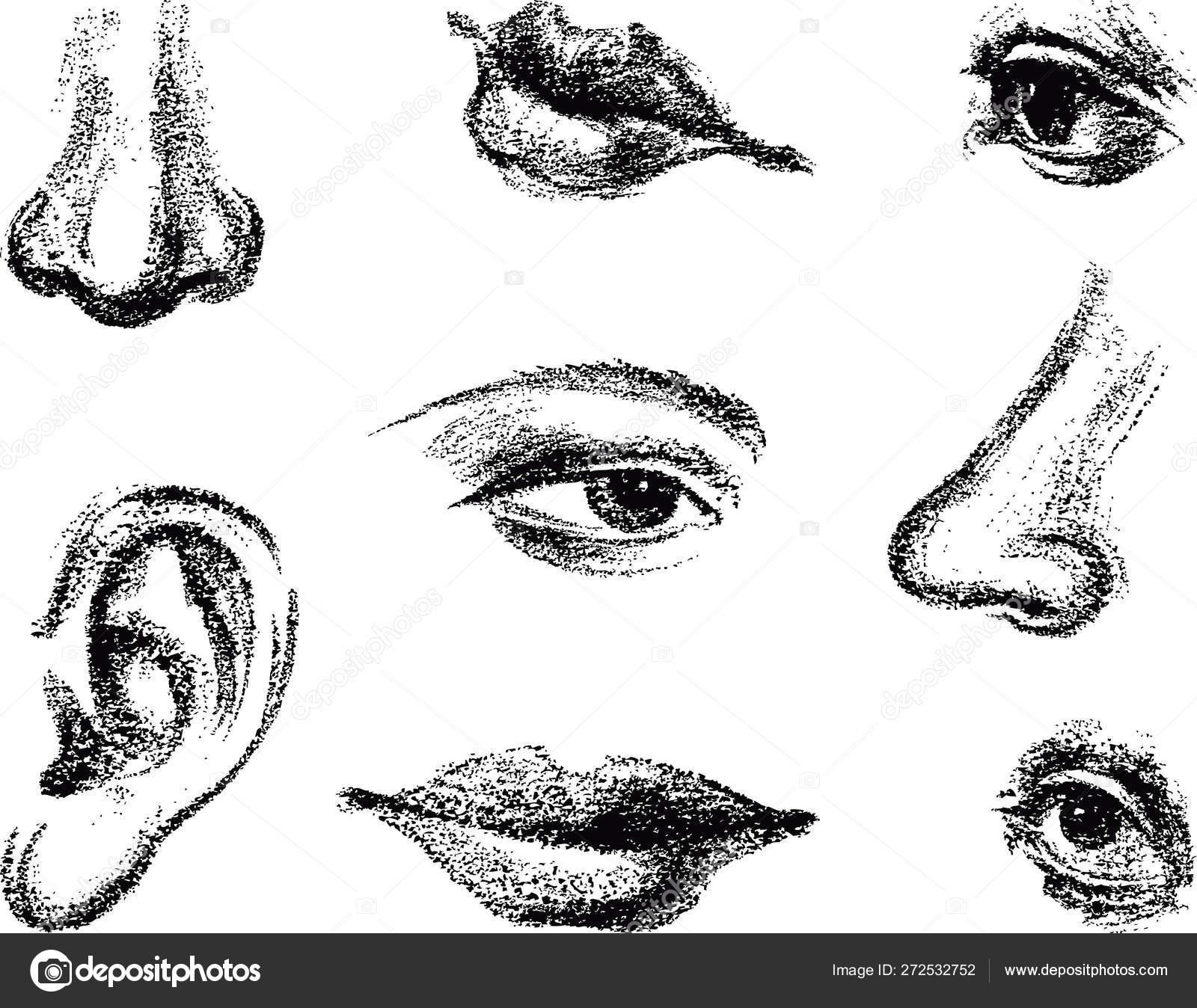 Sketch Human Face Art