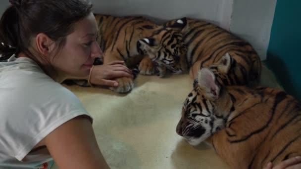Three Tiger Cub sleeping. A woman lies next and strokes them
