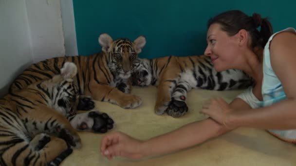 Woman with Tiger Cub. Tiger is stretching