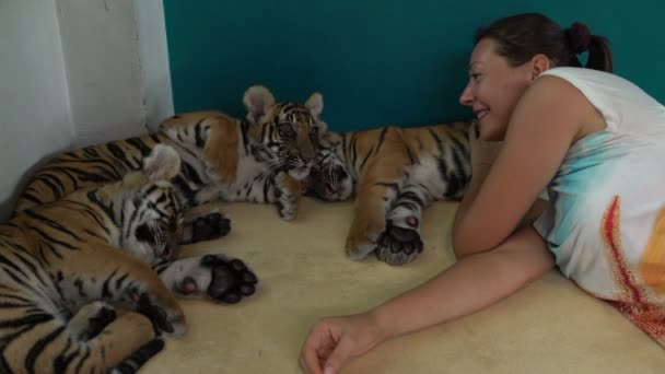 Girl lies with the tiger Cubs. Tiger gets up and goes