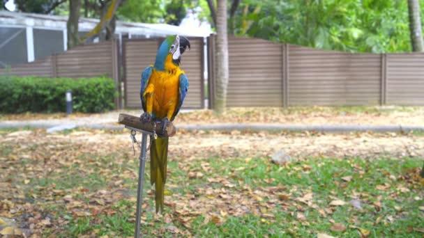 Papoušek Ara sedí na stojan