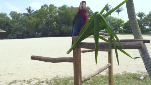 Parrot Ara sits on a tree branch