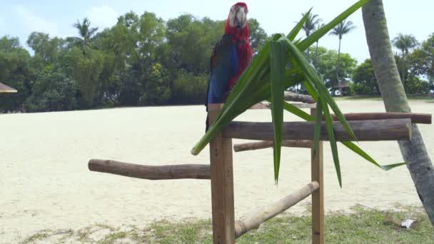 Papoušek Ara sedí na větvi stromu
