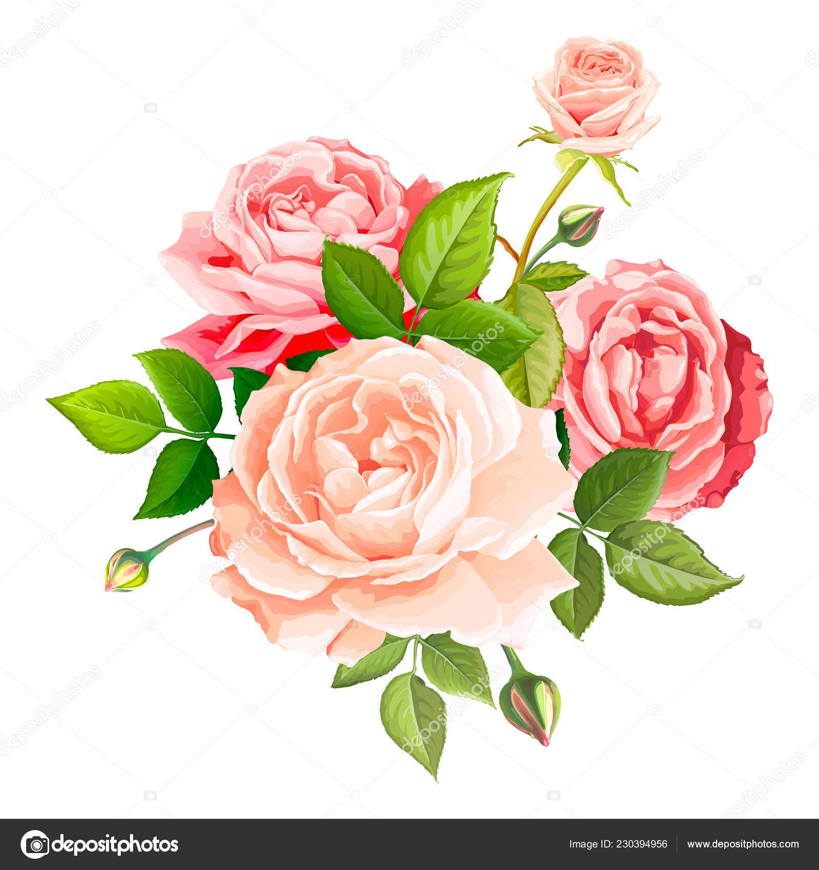 Lovely Rose Flower Stock Vector C Ledelena 230394956
