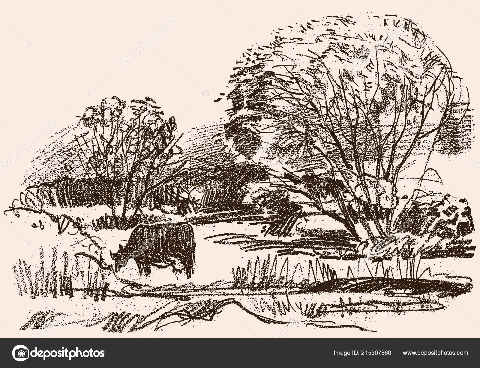 Cow Scenery Drawing Pencil Drawing Rural Landscape Grazing