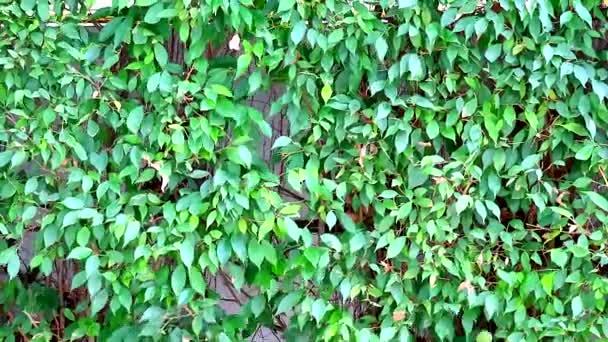die Bäume im Garten werden vom Wind geschwungen